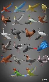 uploads1538607093860-birds_11 copy