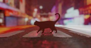 cat 4k dof version