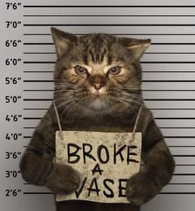 Guilty Puss