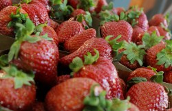i-U Studios - Laserscan Example Strawberries B3D Allegorithmic Example 01_vers2