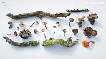 Collection_Output_Mushrooms_hd
