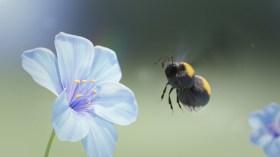 flojoART_bumblebee slow motion