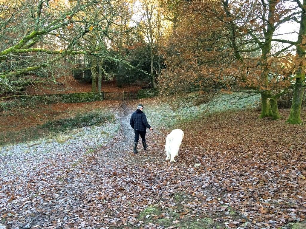 walks, lake district, winter walk, woodland