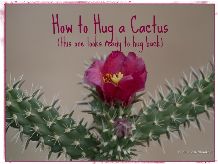 How to Hug a Cactus