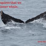 I Want to be Like A Whale