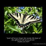 Are Butterflies Needy?