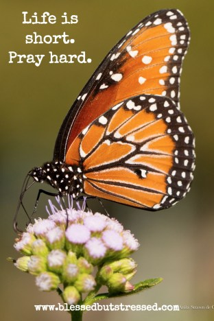 Life is short. Pray hard. A caregiver looks at Psalm 91 http://wp.me/p2UZoK-1FY