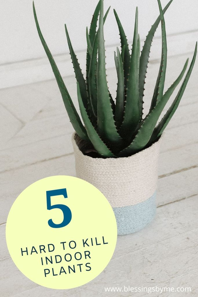 5 Indoor Plants That Are Hard to Kill Pin