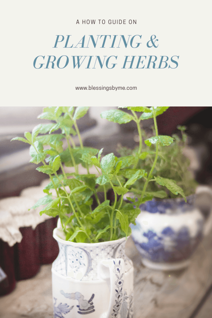A how to guide on planting and growing herbs