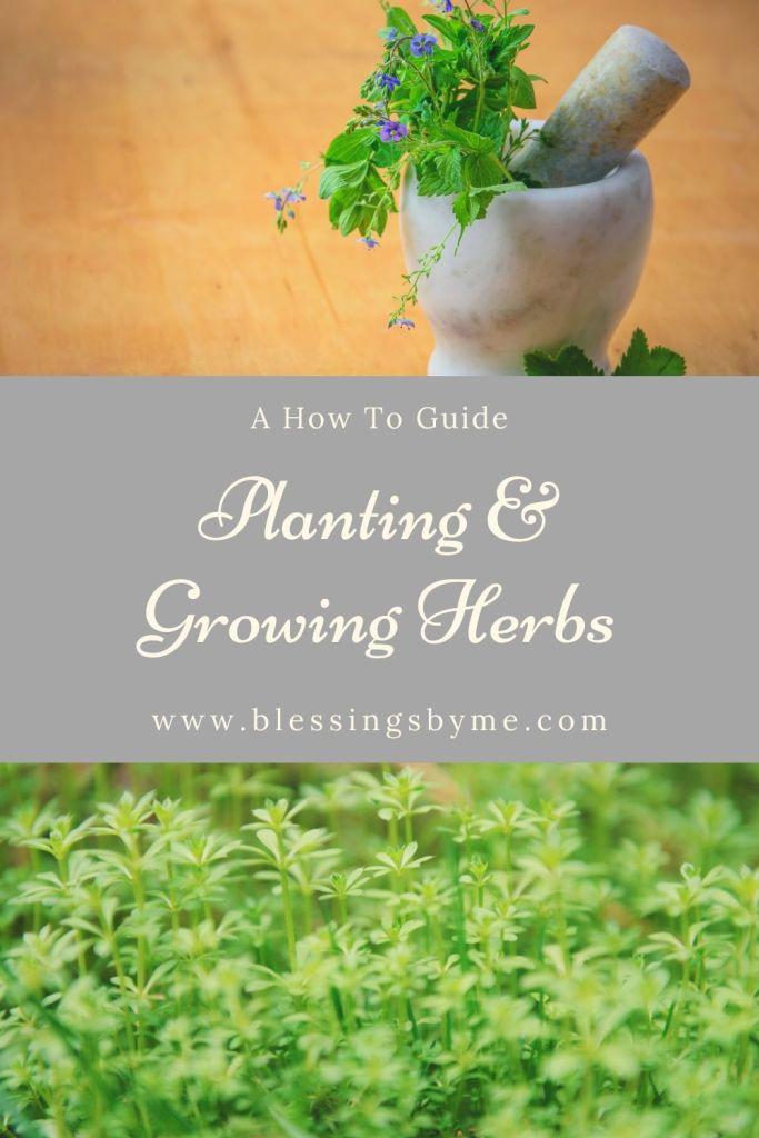 Planting & Growing Herbs