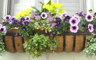 window box gardening