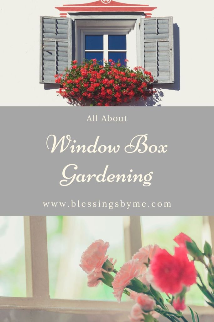 All About Window Box Gardening Pin