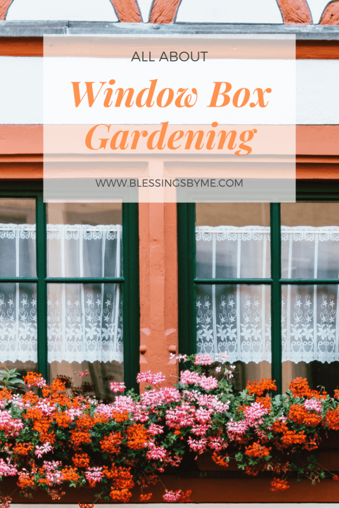All You Need to Know About Window Box Gardening