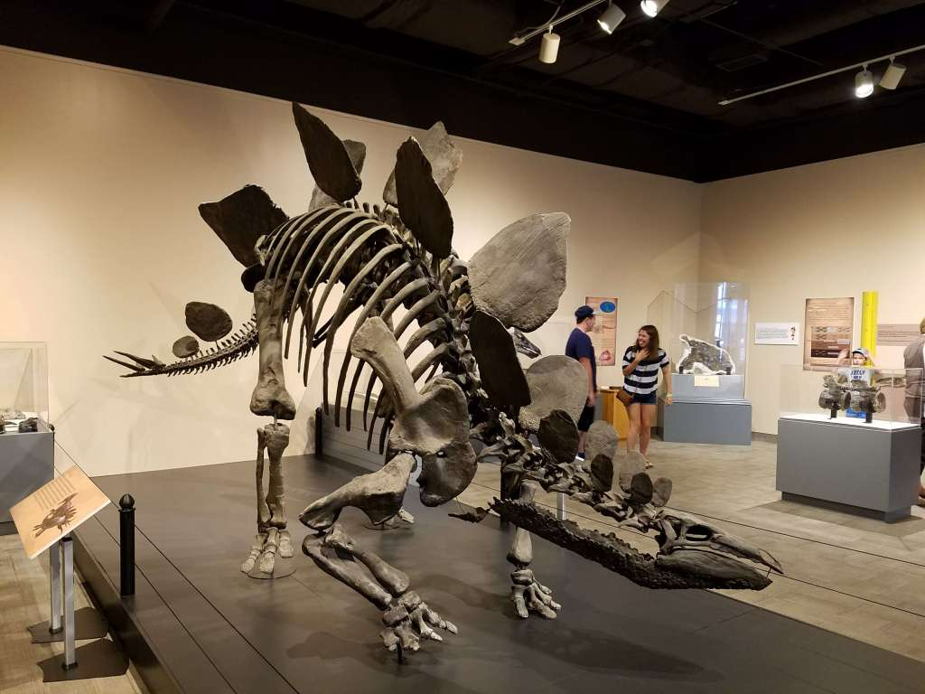 Virginia Museum of Natural History - Dino Exhibit