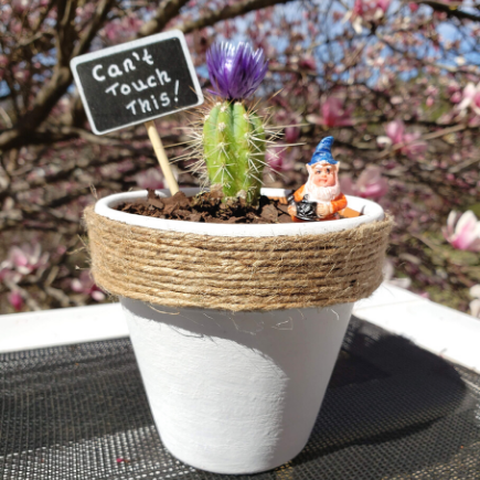 Cactus flower pot diy for mother's day