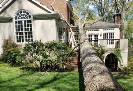 the day a tree fell on our new home