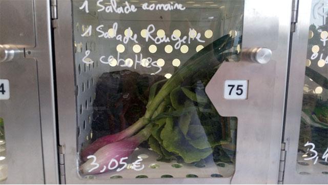Salades et cebettes dans ce casier