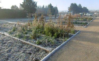 Jardins Cheval-Blanc et plantes sauvages