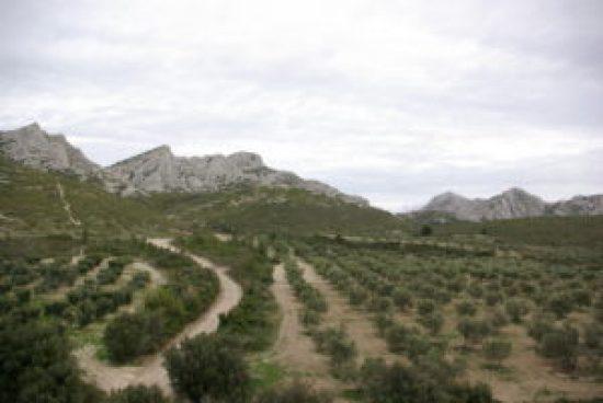 Tourisme durable Parc Naturel des Alpilles