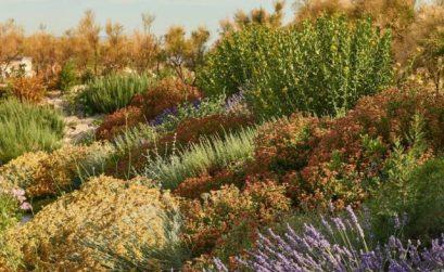 Fête des plantes méditerranéennes au MuCEM