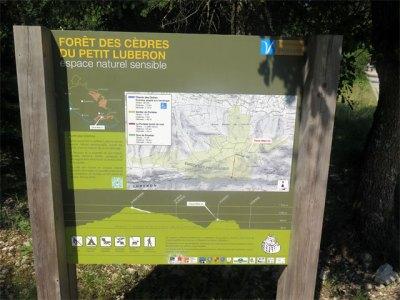 la forêt de cèdres est aménagée pour le public