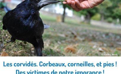 conférence sur les corvidés à Maubec