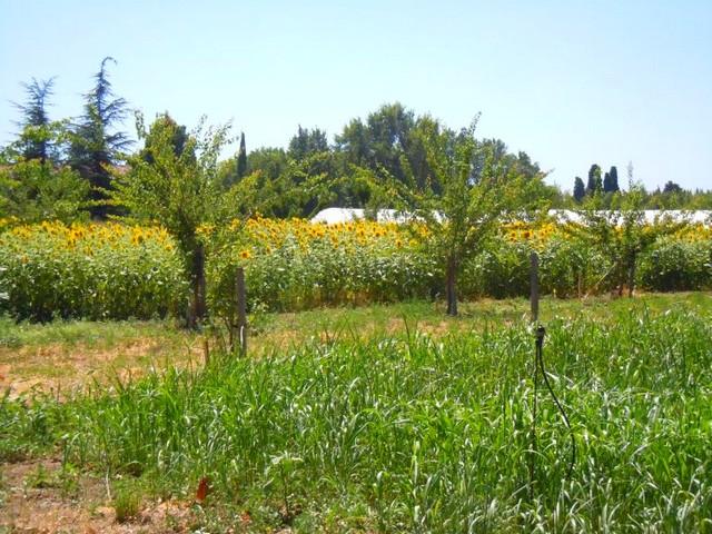 Scientifiques et agriculteurs à la Durette en agroforesterie