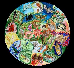 mandala géobiologie chamanique dans les Vosges