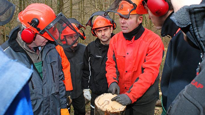 Der Trend nach Selbstversorgung mit Brennholz hält an