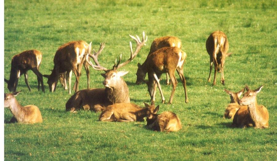 Kastanien für die Hirsche