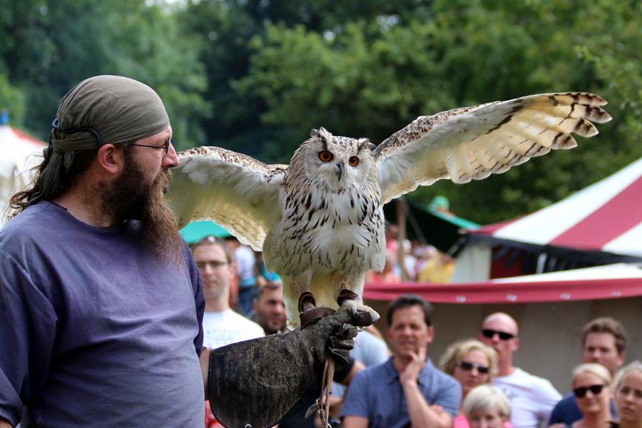 Greifvögel ein Highlight beim Holzmarkt 2015