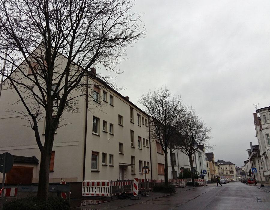 Die zwölf Straßenbäume an der Straße Zur Feldmühle sollen gefällt werden. (Foto: oe)