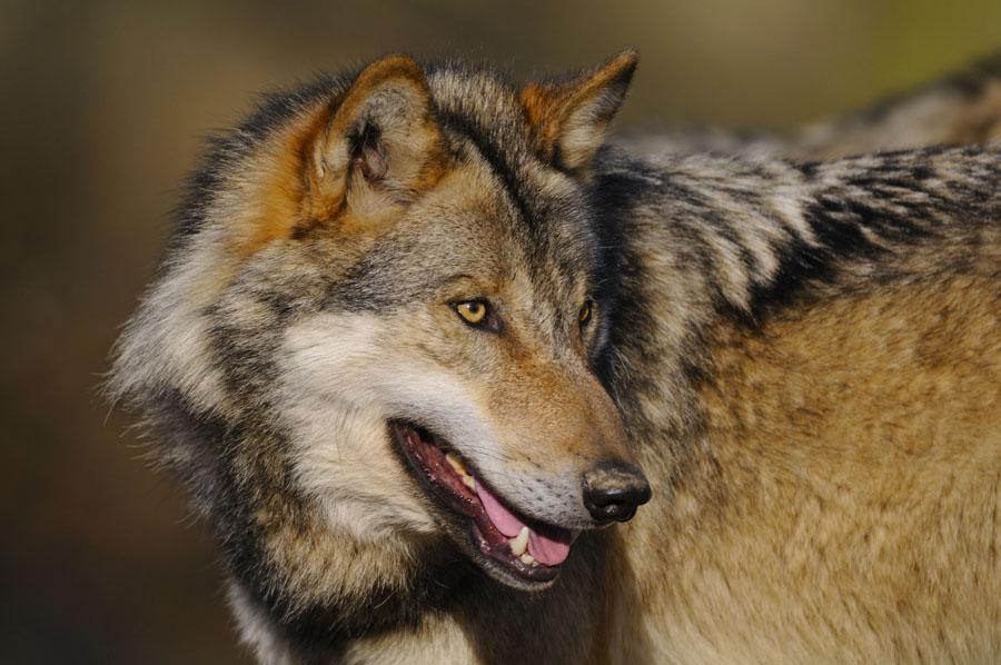 Wolf und Würmchen – Veranstaltungen für Familien im Wildwald