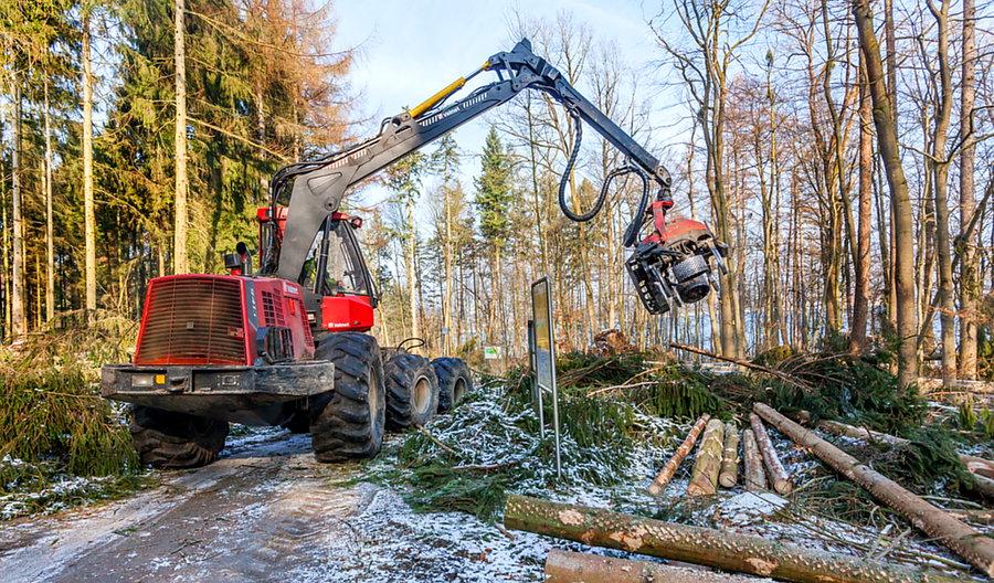 Forstamt gibt Uferrandwege am Möhnesee wieder frei