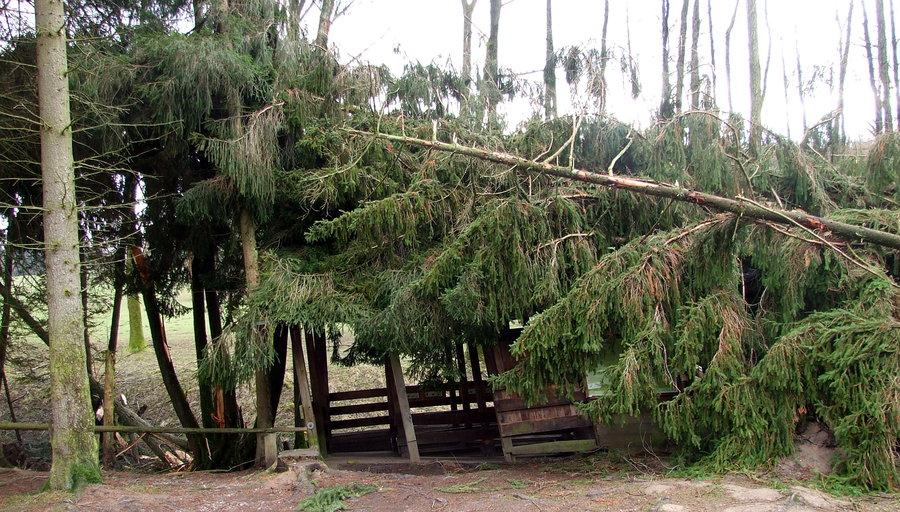 Wildwald: nach Orkanschäden fast alle Hauptwege wieder offen