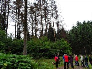 Borkenkäfer: Nadelhölzer im Stadtwald hoch gefährdet