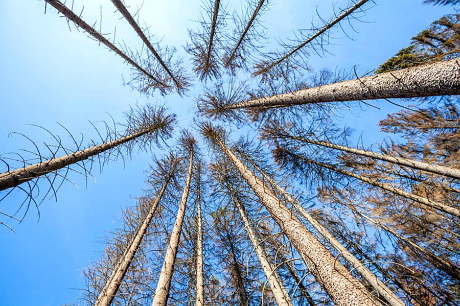 FDP Sundern will 100 Bäume pflanzen