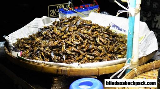 grasshoppersbab
