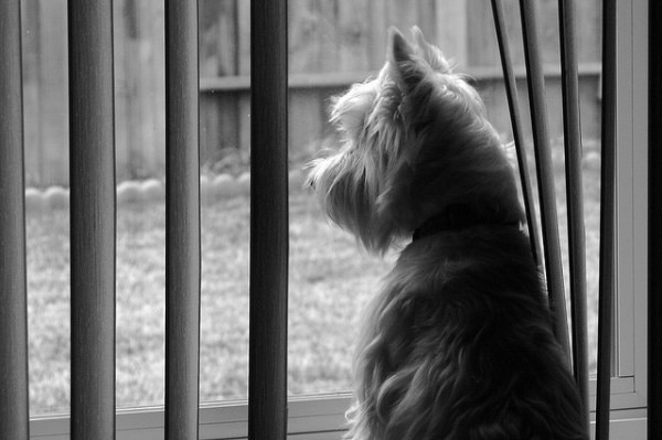 Dog-and-Blinds-Randy-Son-Of-Robert-Flickr