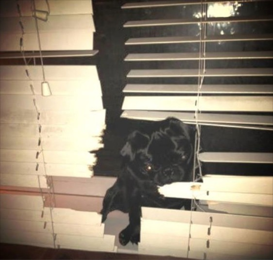 dog proof blinds momarsh my puppy chews on everything including the blinds how to keep dogs from destroying blinds the finishing touch