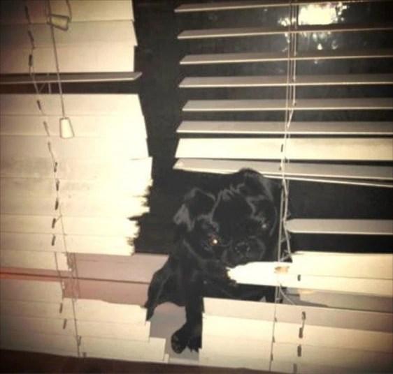 pets-Lily---Kelly-_2951480k