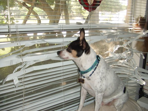 dog proof blinds pet friendly corded blinds how to keep dogs from destroying the finishing touch