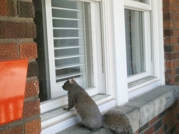 squirrel ate blinds