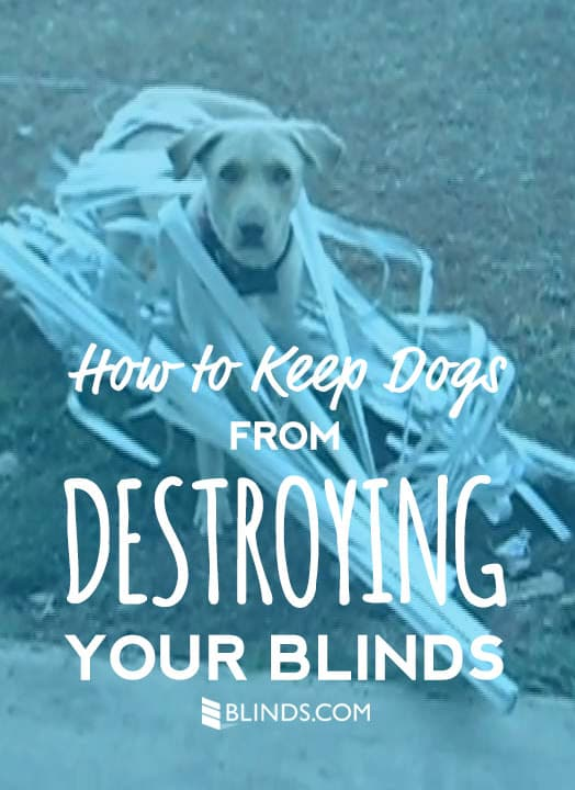 dog proof blinds duck dogblinds how to keep dogs from destroying blinds the finishing touch