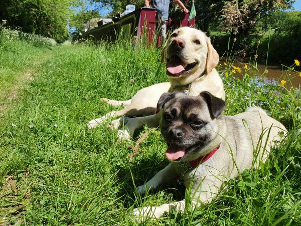 Loki and Ozzie relaxing on a grass towpath.
