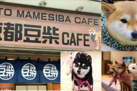 京都新分店「豆柴CAFE」 來跟萌萌小豆柴互動吧!