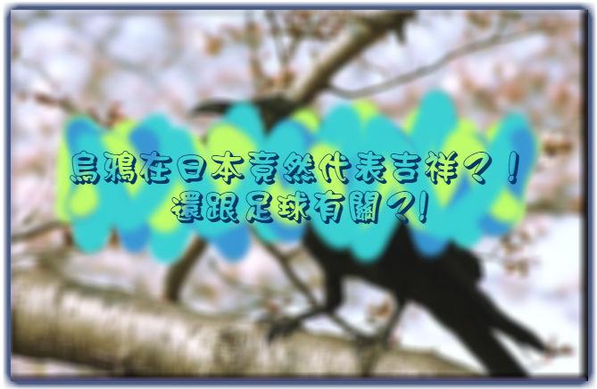 【文化大不同】烏鴉在日本竟然代表吉祥?!還跟足球有關?!