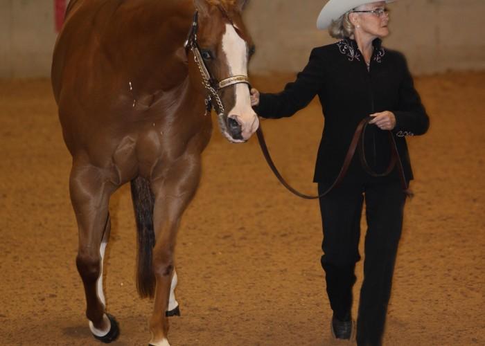 Blissfield horsewoman, horses claim titles