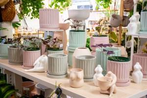 Pots at Bliss Garden Giftware Pialligo