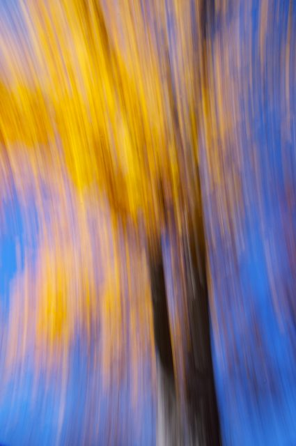 Fall Tree in Motion